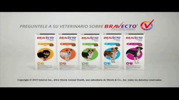 Bravecto Cares TV Spot, 'Programas de entrenamiento' con Elva Saray [Spanish] - Thumbnail 9