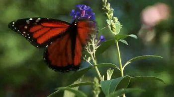 Nickelodeon TV Spot, 'Butterfly Heroes Challenge'