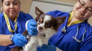 Charter College TV Spot, 'Veterinary Assistant Program: Lovable Creatures'