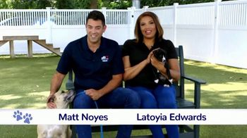 Clear the Shelters TV Spot, 'NBC 10: Bring a New Family Member Home' - Thumbnail 4