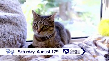 Clear the Shelters TV Spot, 'NBC 10: Bring a New Family Member Home' - Thumbnail 5