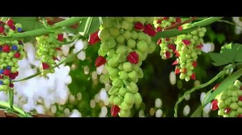 Sun-Maid Raisins Sour Raisin Snacks TV Spot, 'Imagine That!' - Thumbnail 4