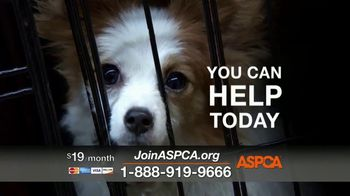 ASPCA TV Spot, 'Shocking Situations' - Thumbnail 6