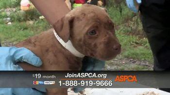 ASPCA TV Spot, 'Shocking Situations' - Thumbnail 9