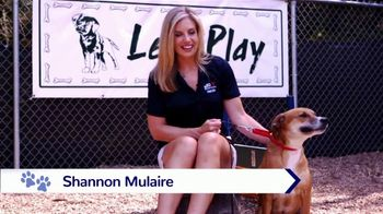 Clear the Shelters TV Spot, 'NBC 10: Take Home a New Best Friend' - Thumbnail 2