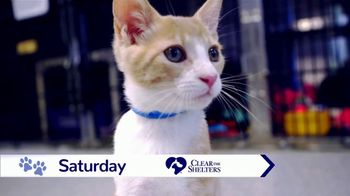 Clear the Shelters TV Spot, 'NBC 10: Take Home a New Best Friend' - Thumbnail 4