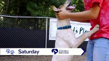 Clear the Shelters TV Spot, 'NBC 10: Take Home a New Best Friend' - Thumbnail 5