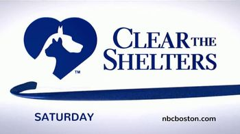 Clear the Shelters TV Spot, 'NBC 10: Take Home a New Best Friend' - Thumbnail 7