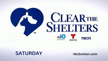 Clear the Shelters TV Spot, 'NBC 10: Take Home a New Best Friend' - Thumbnail 9