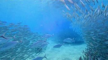 Legal Sea Foods Restaurants TV Spot, 'Our Fish are High' - Thumbnail 3