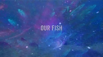 Legal Sea Foods Restaurants TV Spot, 'Our Fish are High' - Thumbnail 4
