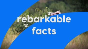K9 Advantix II TV Spot, 'Animal Planet: Rebarkable Facts' - Thumbnail 2