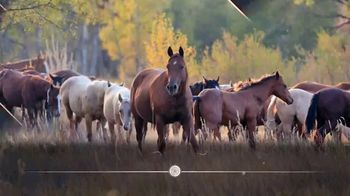 6666 Ranch Return to the Remuda Sale TV Spot, 'Find Your Next Champion'