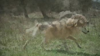 Blue Buffalo TV Spot, 'Feed the Wolf: Venture Into the Wild Sweepstakes' - Thumbnail 3