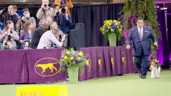 Purina Pro Plan TV Spot, 'Three Times Westminster Best in Show' - Thumbnail 1