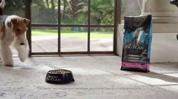Purina Pro Plan TV Spot, 'Three Times Westminster Best in Show' - Thumbnail 5