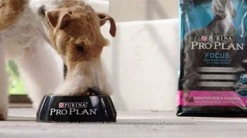 Purina Pro Plan TV Spot, 'Three Times Westminster Best in Show' - Thumbnail 6