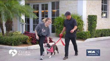 VCA Animal Hospitals TV Spot, 'Forever Homes' - Thumbnail 3