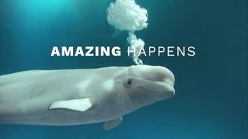 SeaWorld End of Summer Sale TV Spot, 'Amazing Happens: Single-Day Tickets and Fun Card' - Thumbnail 2