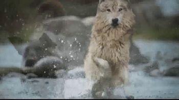 Blue Buffalo BLUE Wilderness TV Spot, 'Feed the Wolf' - Thumbnail 10