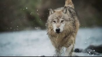 Blue Buffalo BLUE Wilderness TV Spot, 'Feed the Wolf' - Thumbnail 2