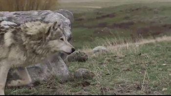 Blue Buffalo BLUE Wilderness TV Spot, 'Feed the Wolf' - Thumbnail 6