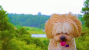 DOGTV TV Spot, 'Unleashed' - Thumbnail 1