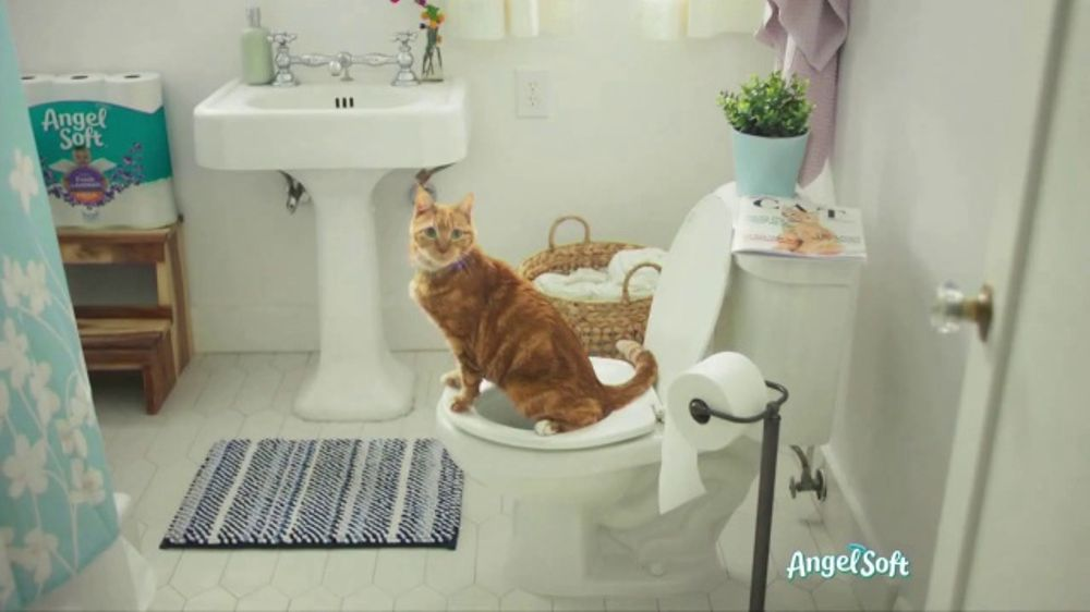 Angel Soft With Fresh Lavender Tv Commercial Cat Ispot Tv