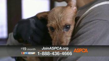 ASPCA TV Spot, 'Emotional Trauma Takes Time to Heal'