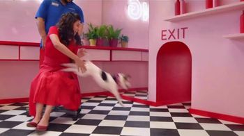 PetSmart TV Spot, 'Anything for Pets: Hotel, Training, Grooming, Day Camp' - Thumbnail 5