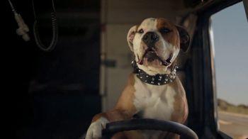 2022 Subaru Forester TV Spot, 'Dog Tested: Honk' [T2] - Thumbnail 4