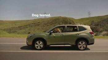 2022 Subaru Forester TV Spot, 'Dog Tested: Honk' [T2] - Thumbnail 9
