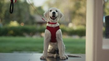 Wells Fargo Active Cash VISA Card TV Spot, 'Puppy' Featuring Regina King