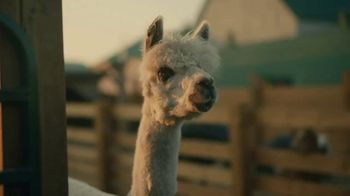 CarMax TV Spot, 'Buy Online With Home Delivery: Alpaca' Song by bbno$ & lentra