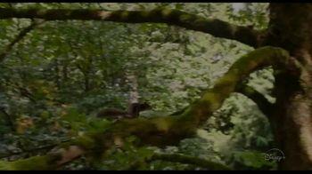 Disney+ TV Spot, 'Flora & Ulysses' - Thumbnail 2