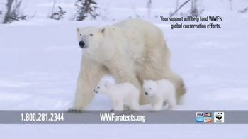 World Wildlife Fund TV Spot, 'WWF on TV: Polar Bears' Song by A Great Big World' - Thumbnail 6