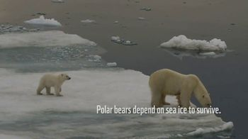 World Wildlife Fund TV Spot, 'WWF on TV: Polar Bears' Song by A Great Big World' - Thumbnail 1