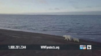 World Wildlife Fund TV Spot, 'WWF on TV: Polar Bears' Song by A Great Big World' - Thumbnail 4