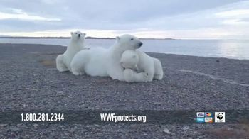 World Wildlife Fund TV Spot, 'WWF on TV: Polar Bears' Song by A Great Big World' - Thumbnail 5
