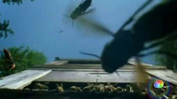 Discovery+ TV Spot, 'Attack of the Murder Hornets' - Thumbnail 1