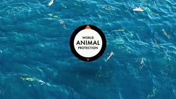 World Animal Protection TV Spot, 'Dolphin Defender' Featuring Kelly Slater - Thumbnail 10