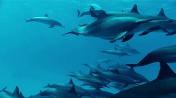 World Animal Protection TV Spot, 'Dolphin Defender' Featuring Kelly Slater - Thumbnail 5