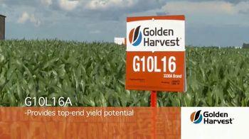 Golden Harvest G10L16A TV Spot, 'Maximum Yield Potential' - Thumbnail 2