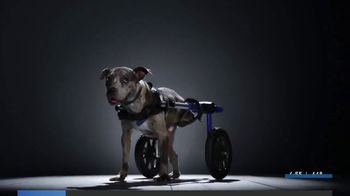 Subaru TV Spot, 'National Make a Dog's Day: The Underdogs: Heartstrings' [T2] - Thumbnail 1