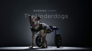 Subaru TV Spot, 'National Make a Dog's Day: The Underdogs: Heartstrings' [T2]