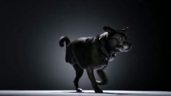 Subaru TV Spot, 'National Make a Dog's Day: The Underdogs: Heartstrings' [T2] - Thumbnail 4