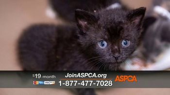 ASPCA TV Spot, 'Hunger Pains' - Thumbnail 9