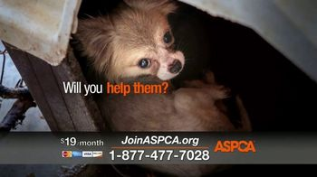 ASPCA TV Spot, 'Hunger Pains' - Thumbnail 4
