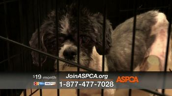 ASPCA TV Spot, 'Hunger Pains' - Thumbnail 5