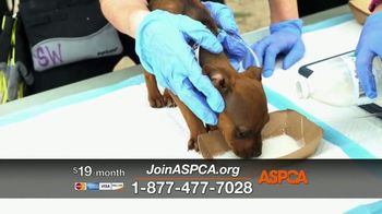 ASPCA TV Spot, 'Hunger Pains' - Thumbnail 6